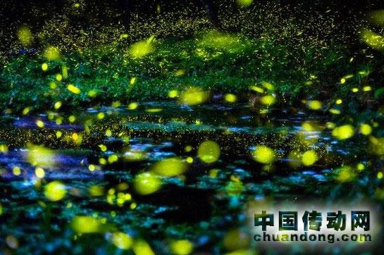 高效光源led灯:模拟萤火虫发光原理
